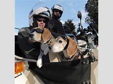 Slobbery sidekicks Dogs ride in bikers' sidecars The Blade