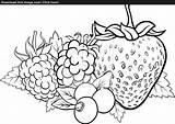 Coloring Berry Designlooter Fruits Illustration Vector 93kb 1600 sketch template