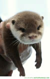 Otter Cute Baby Animals