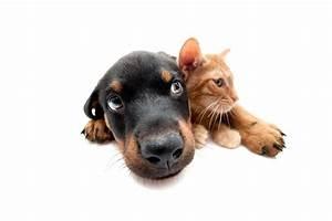 Pet Emergency Newsletter  Chest Drain Placement  U2013 Nursing