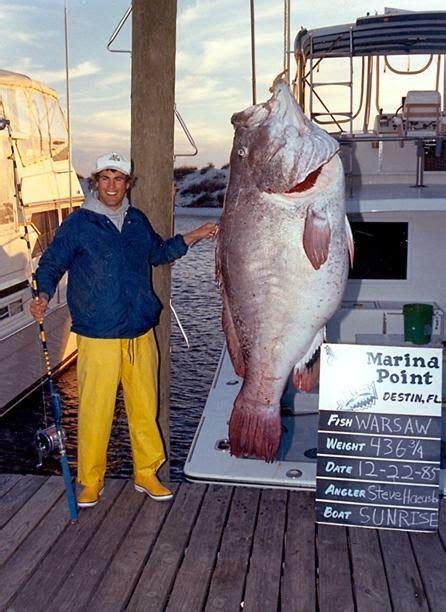 grouper warsaw fish record florida caught gulf epinephelus nigritus lb biggest giant freshwater mexico ever fishing largest fishes records destin