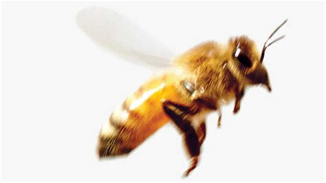 Images Of Bees News Cogan