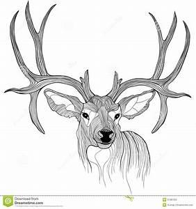 Pictures Of Reindeers Cartoons Head | New Calendar ...
