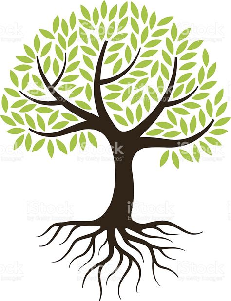 family tree with roots clipart roots clipart tree illustration pencil and in color