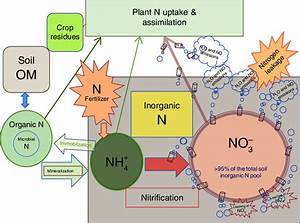 The Nitrogen Cycle In A Typical Agricultural System  I E
