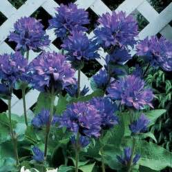 Perennials Partial Shade Plants and Flowers
