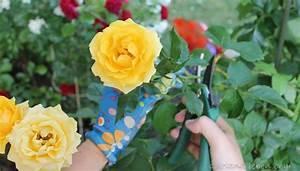 Wann Pfingstrosen Schneiden : wann rosen schneiden herbst wann rosen schneiden rose herbst schneiden herbst dekor ideen rosen ~ Frokenaadalensverden.com Haus und Dekorationen