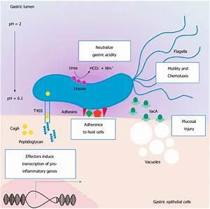 Helicobacter Pylori Virulence Factors Associated With