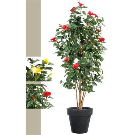 taille hibiscus en pot 28 images hibiscus syriacus alth 233 a mauve en arbre tailler et