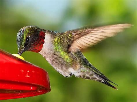 Kolibri - Spoki