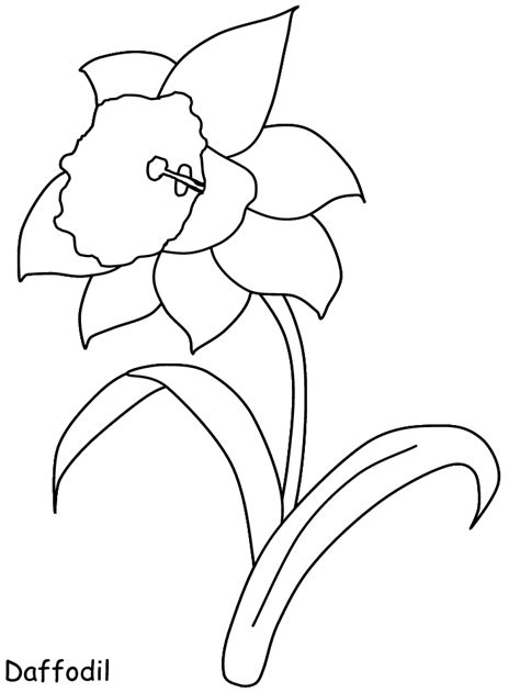 daffodil flowers coloring pages coloring page book  kids