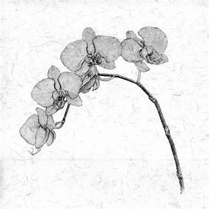 85 best Flowers drawings of orchids images on Pinterest ...