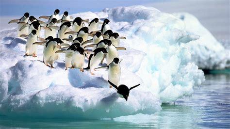 ファースト ペンギン と は