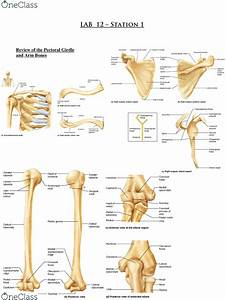 Iliac Crest Anatomy