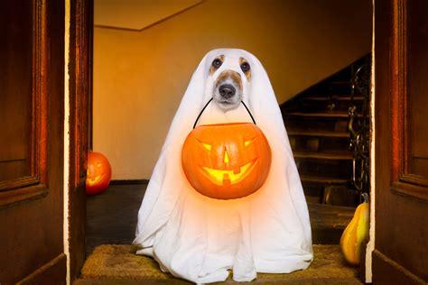 fancy dress costume sellers    frightful halloween