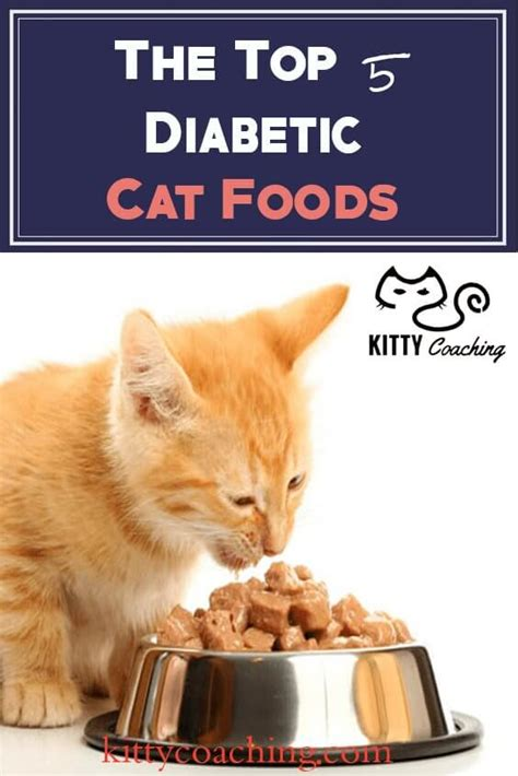 what is the best cat food cat food archives kittycoaching com