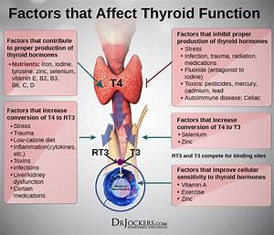 Thyroliver Protect  U2013 Dr  Jockers Store