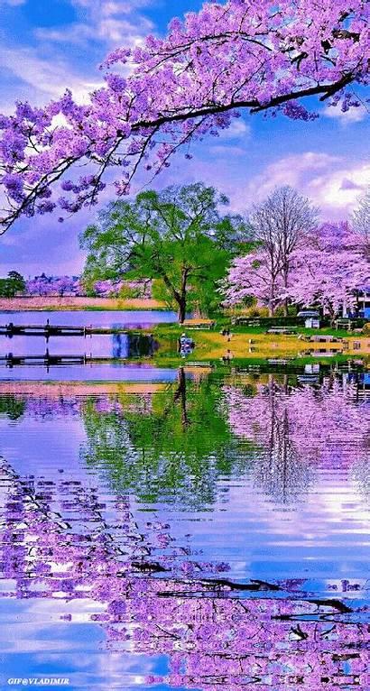 Nature Scenery Flower Spring Beautifulnature Naturephotography Lake