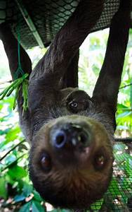 enter the world of sloths on international sloth day
