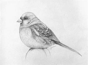 bird, drawing, sketch - image #198112 on Favim.com
