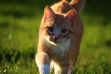Cute, Grass, Animal, Nature, Grass, Spring