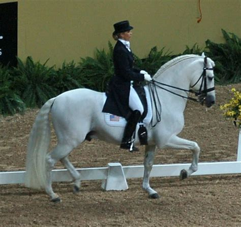 andalusian horse petmapz breed iberian country