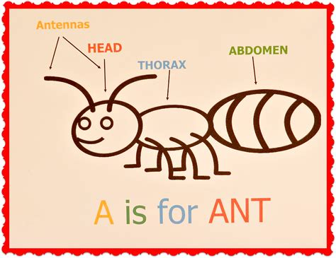 a is for ant ducks n a row 811 | ant picture