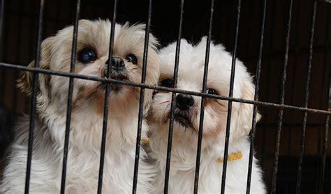 quebec passes animal protection law toronto star