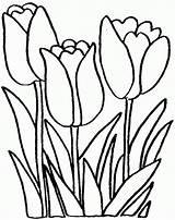 Tulip Coloring Preschool Flowers Pages Sheets Flower Printable Tulips Coloringhome Preschoolers Popular Drawing sketch template