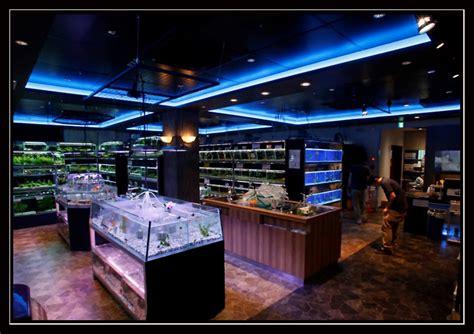 reportage 183 crevettes aquarium 42