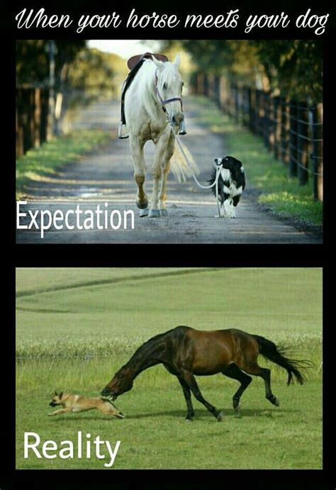 Horse Memes - 3324 best a horse is a horse images on pinterest horses horseback riding and equestrian quotes
