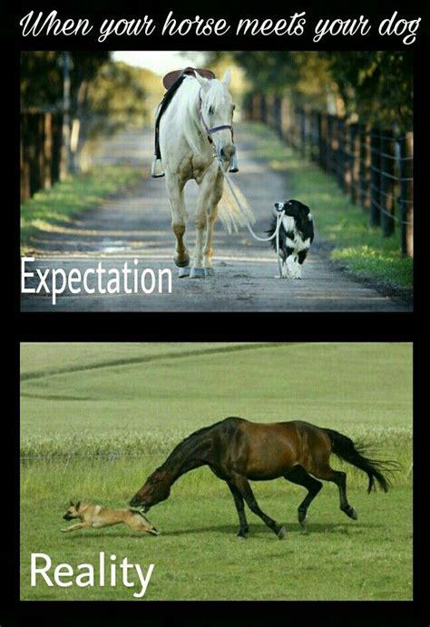 Horse Riding Meme - the 25 best horse meme ideas on pinterest funny horse memes funny horse quotes and horse