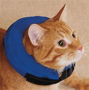 4 Comfortable Cat and Dog Cone Alternatives Animal Hearted Animal Hearted Apparel