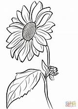 Sunflower Coloring Pages Printable Flower Seeds Printables Cute Tablets Compatible Ipad Android Version sketch template