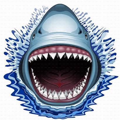 Shark Jaws Mouth Attack Vector Jaw Open