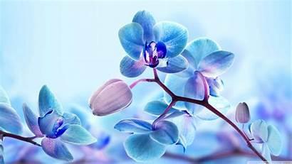 Orchid Flowers Desktop Uhd Ultrawide Monitor Background