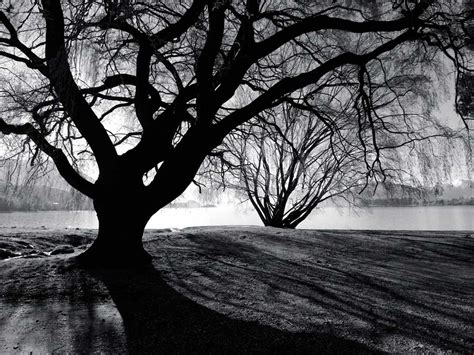 black trees tree desktop backgrounds wallpaper cave