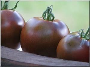 Tomate Noir De Crimée : dossier des tomates de toutes les couleurs ~ Dailycaller-alerts.com Idées de Décoration