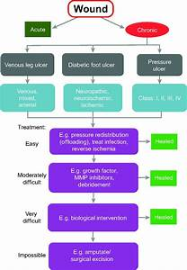 Clinical Challenges Of Chronic Wounds  Searching For An Optimal Animal Model To Recapitulate