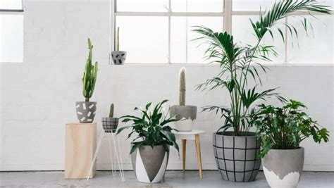 Best Pot Plant For Bathroom by How To Decorate With And Style Indoor Plants