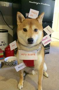 Best Dog Halloween Costumes 2014