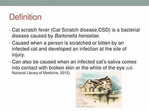 Ppt - Cat Scratch Fever Powerpoint Presentation
