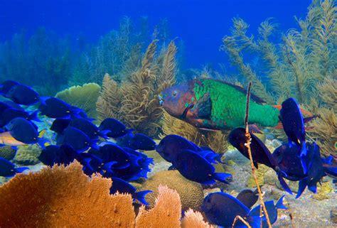 Le Dive - diving waterside apartments dive