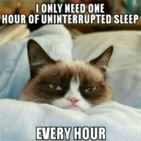 Tired Cat Meme - 25 best images about sleepy grumpy cat on pinterest