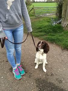 residential gundog dog training hand over of cooper the With residential dog training