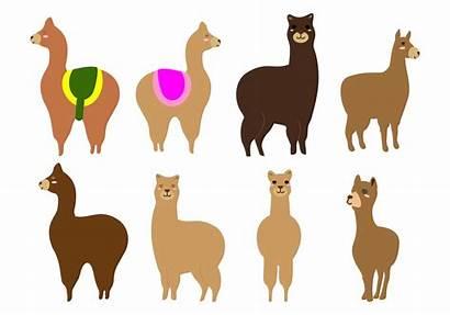 Llama Lama Alpaca Alpaka Head Vektor Freie