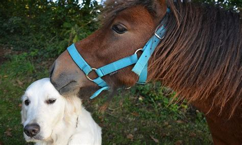 dog horse breeds cowgirl farms inbox newsletter every week