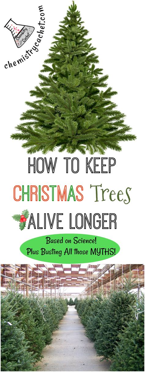 christmas trees alive longer based  science