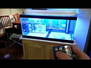 Aquarium L Form : a better diy led aquarium light youtube gone fishin ~ Sanjose-hotels-ca.com Haus und Dekorationen