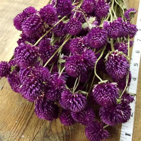 purple globe amaranth gomphrena diy dried flower
